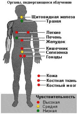 Воздействие радиации на ткани человека