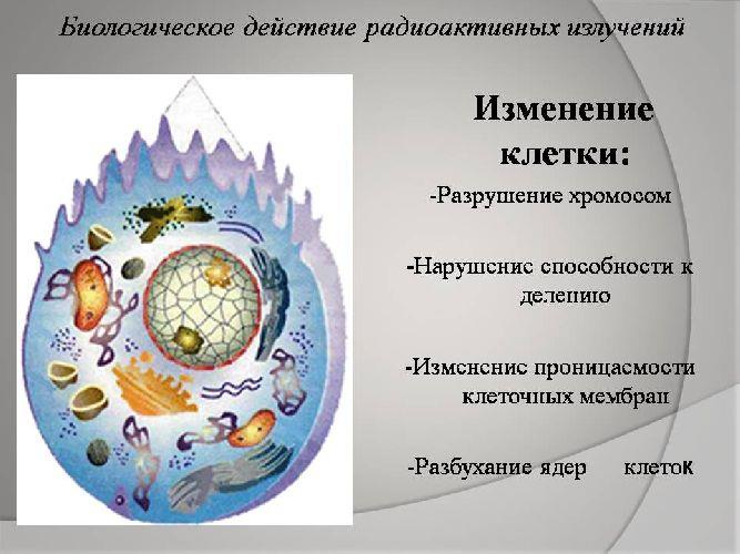 Действие радиации на клетку