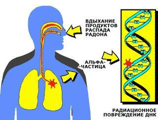 Радиоактивные вещества вызывают необратимые изменения в структуре ДНК
